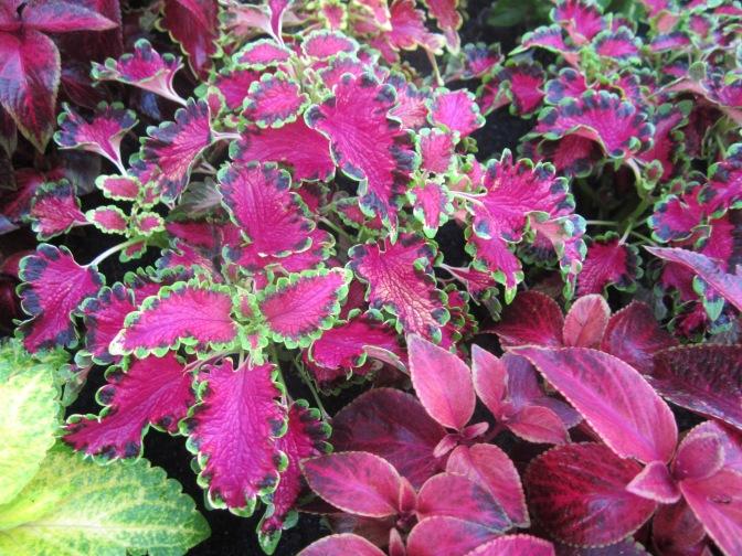 Les plantes d'Asie