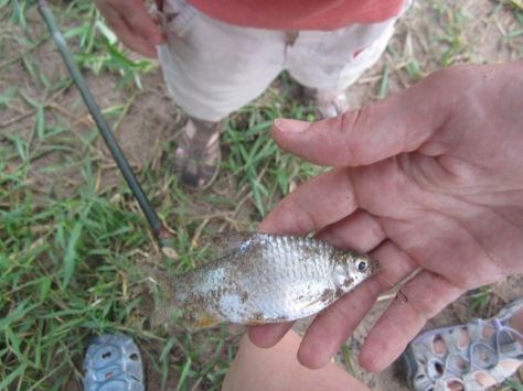 Le poisson pêché par Lise.