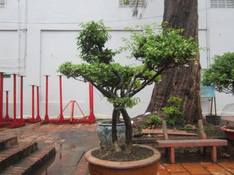 Devant une pagode chinoise, nous avons vu de superbes bonsaïs.