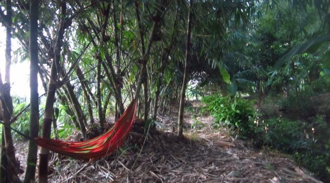 Logements en bambou