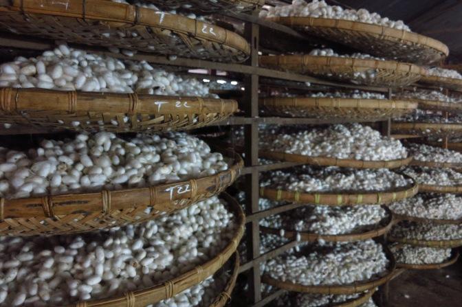 Visitez une fabrique traditionnelle de soie