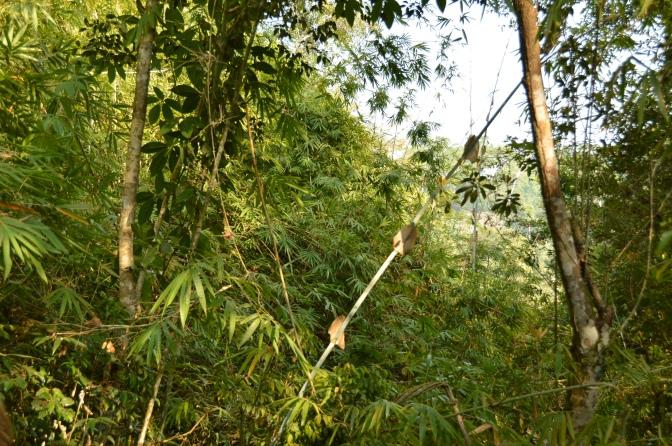 Le parc national de Khao Yai
