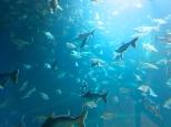 L'aquarium de Nong Khai