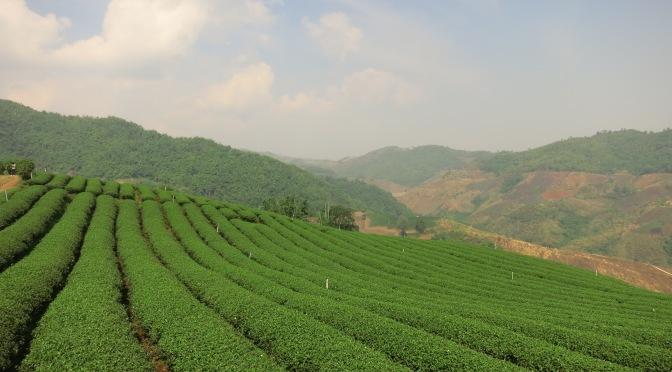 Chiang Rai et le nord de la Thaïlande