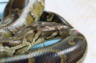 Notre ami python