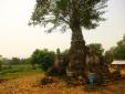 Un temple en ruine