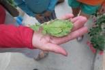 Un insecte-feuille