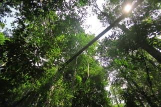 La canopée, des passerelles au sommet des arbres