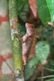 Un caméléon aperçu dans les bois