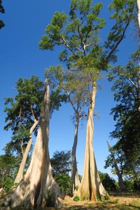 De beaux arbres sur la route menant au ferry