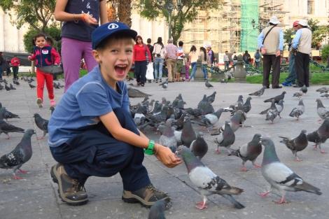 et ses pigeons