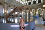 Au musée d'histoire naturelle