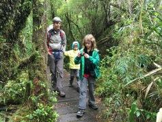 "La forêt humide de ""Tepu"" (espèce arboricole)"