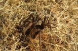 Les araignées locales