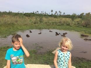 Il fait trop chaud pour les capybaras