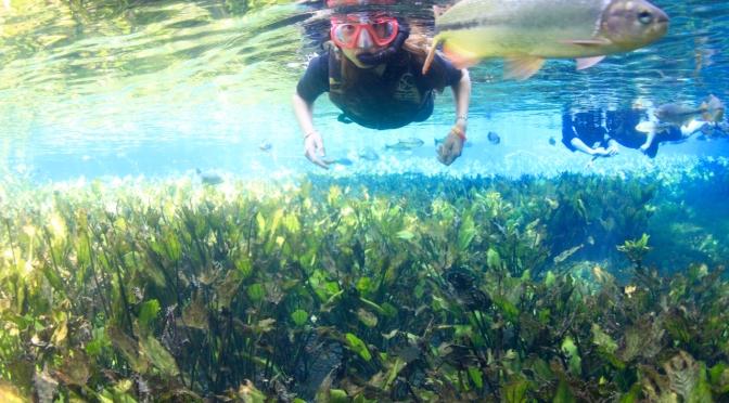 Le monde aquatique de Bonito