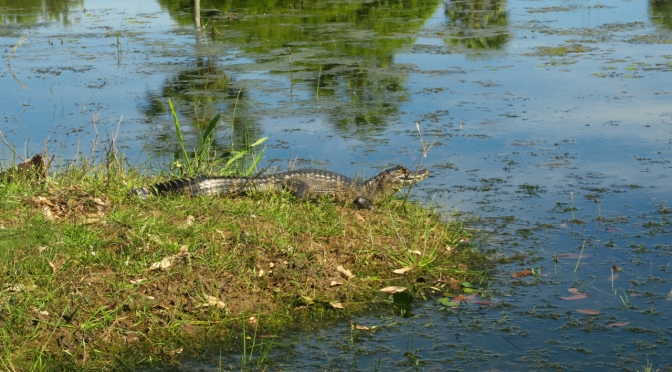 Les aventuriers du Pantanal