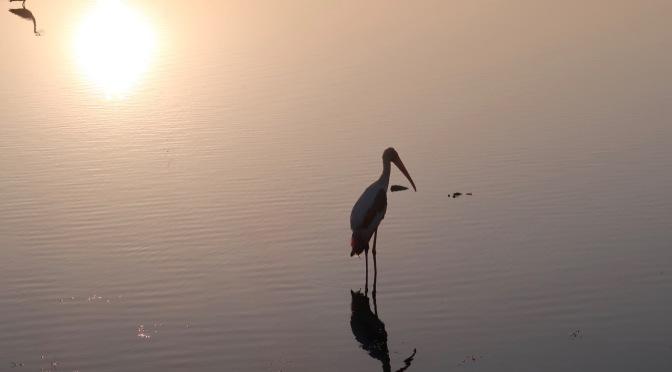 Bundala, le paradis des oiseaux